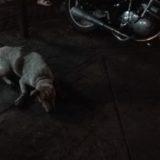 タイで犬に襲われたら… どうする?