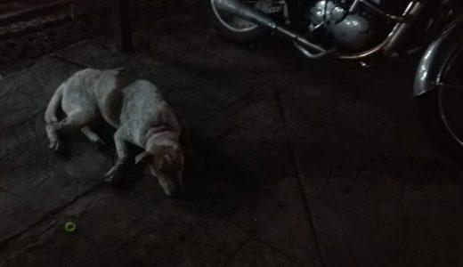 タイで犬に襲われたら... どうする?