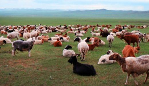【タイ語のことわざ】羊のドリーは余りにも似すぎているのが問題だ!