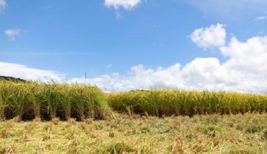 【タイ語のことわざ】状態によって名前が変わるのは、米が重要だから!